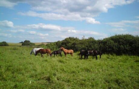 Nasze konie :)