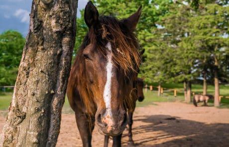 Mazurski Folwark, konie