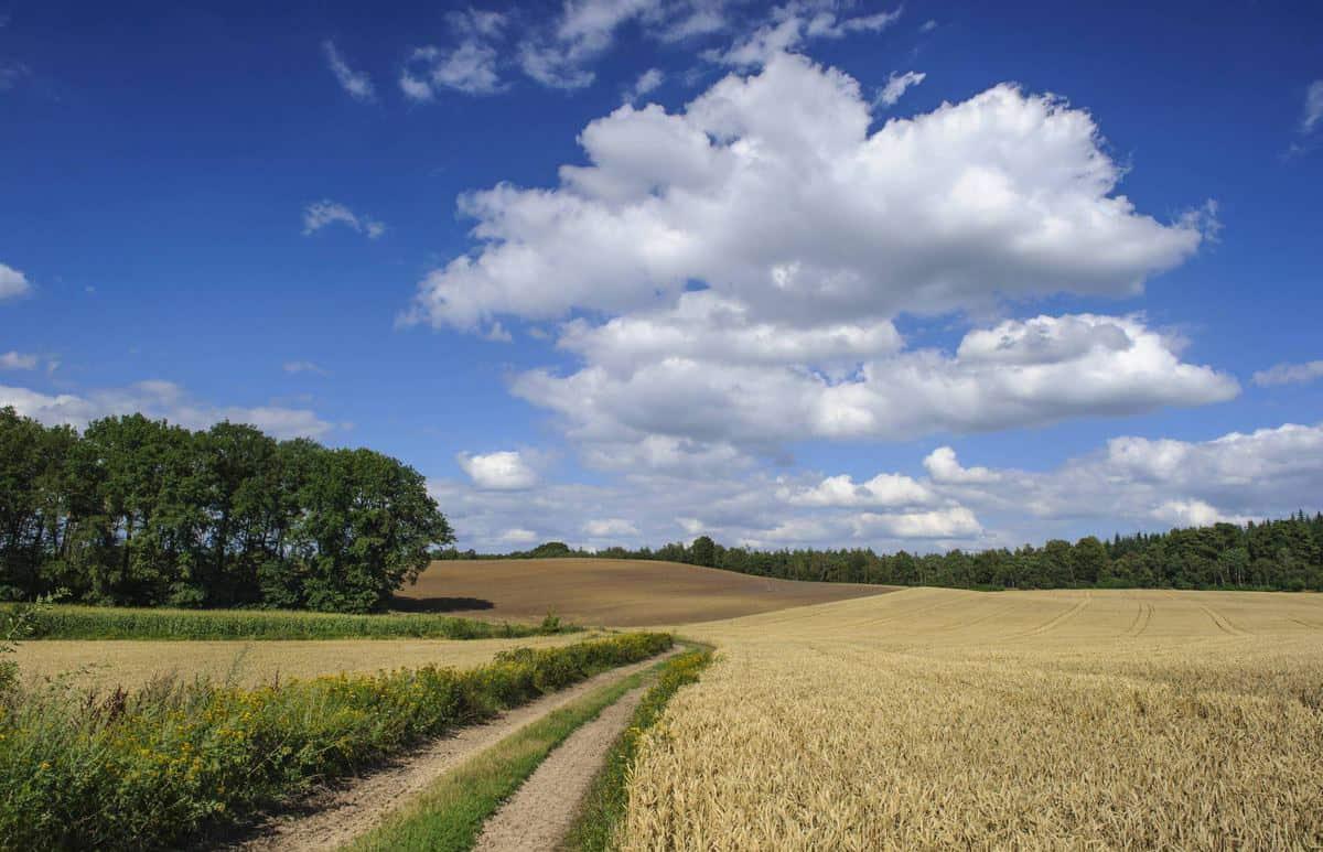 Poprzez łąki, poprzez pola